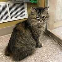 Adopt A Pet :: Janie - Byron Center, MI