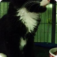 Adopt A Pet :: Rocket - Bloomingdale, NJ