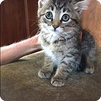 Adopt A Pet :: Mellie - Middleton, WI