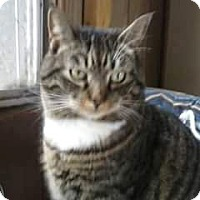 Adopt A Pet :: Carson - Harrisonburg, VA