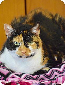 Domestic Shorthair Cat for adoption in Des Moines, Iowa - Arabella