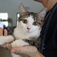 Adopt A Pet :: Laura - Brunswick, GA