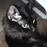 Adopt A Pet :: Miranda - Alexandria, VA