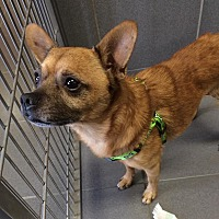 Adopt A Pet :: Sammy - Jackson, MI
