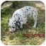Photo 1 - Dalmatian Puppy for adoption in League City, Texas - Booster