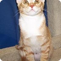Adopt A Pet :: K-Maddie1-Ruby - Colorado Springs, CO