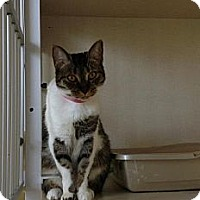 Adopt A Pet :: Inara - Winter Haven, FL