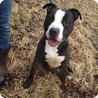 Adopt A Pet :: # 111-14  URGENT! - Zanesville, OH