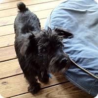 Adopt A Pet :: Stella - Austin, TX