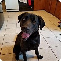 Adopt A Pet :: Cooper - Brooklyn Center, MN