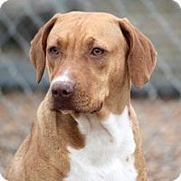 Adopt A Pet :: Nola Beatrice - Cranston, RI