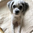 Adopt A Pet :: Hansi
