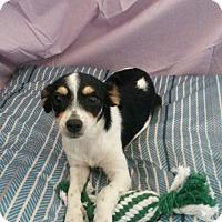 Adopt A Pet :: Arlene - Rosemead, CA