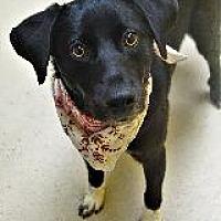 Adopt A Pet :: DUDLEY - Little Rock, AR