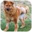 Photo 4 - German Shepherd Dog Mix Dog for adoption in Hamilton, Ontario - Kammy