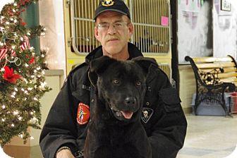 Labrador Retriever/Chow Chow Mix Dog for adoption in Elyria, Ohio - Lucy