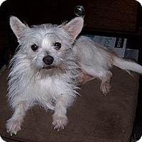 Adopt A Pet :: Eli - San Angelo, TX