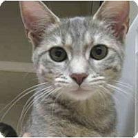Adopt A Pet :: Hillary - Mesa, AZ