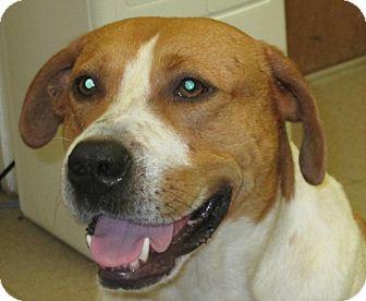 Hound (Unknown Type) Mix Dog for adoption in Rockville, Maryland - Biggin