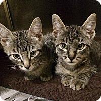 Adopt A Pet :: Hercules - New York, NY