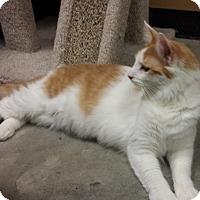 Adopt A Pet :: Jody - St. Louis, MO