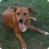 Adopt A Pet :: Sugar - Lufkin, TX
