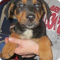 Adopt A Pet :: Rita - Salem, NH