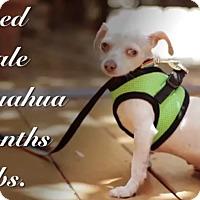 Adopt A Pet :: Gigi - Watch my video! - Los Angeles, CA