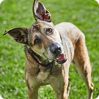 Adopt A Pet :: Kassie - Petaluma, CA