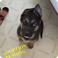 Adopt A Pet :: DAKOTA - Winnipeg, MB