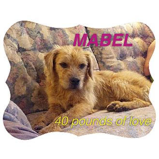 Terrier (Unknown Type, Medium) Mix Dog for adoption in West Warwick, Rhode Island - MABEL in Rhode Island