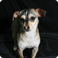 Adopt A Pet :: Corlie - Longview, TX