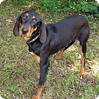 Adopt A Pet :: Madison - York, PA
