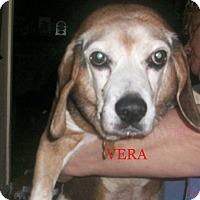 Adopt A Pet :: VERA - Ventnor City, NJ