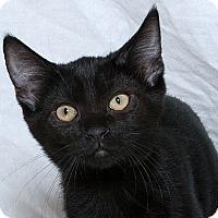 Adopt A Pet :: Vader W - Sacramento, CA