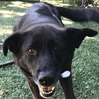 Adopt A Pet :: Helga - Lockport, NY
