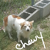 Adopt A Pet :: Chewy - Palm Bay, FL