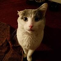 Adopt A Pet :: Cloudy Sky - Trenton, NJ