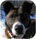 Shepherd (Unknown Type) Mix Dog for adoption in Olathe, Kansas - Agatha