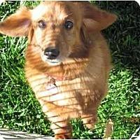 Adopt A Pet :: Teri - Garden Grove, CA