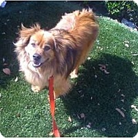 Adopt A Pet :: The Wanderer - Fowler, CA