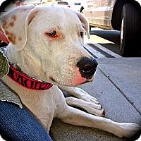 Adopt A Pet :: Nena - Cypress, CA