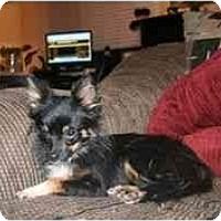 Adopt A Pet :: Hailey - Arlington, TX
