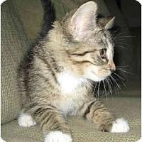 Adopt A Pet :: Halo - Davis, CA