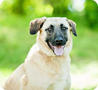 Shepherd (Unknown Type) Mix Dog for adoption in Washington, D.C. - Sadie