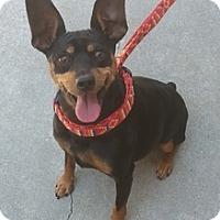 Adopt A Pet :: Brutus - Sacramento, CA
