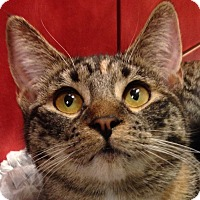 Adopt A Pet :: Whiskey - Winchester, CA
