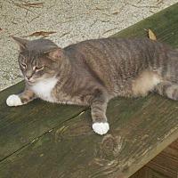 Adopt A Pet :: Treckie - Naples, FL