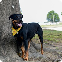 Adopt A Pet :: Dixie - Muldrow, OK