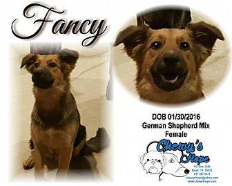 German Shepherd Dog Mix Dog for adoption in Boyd, Texas - Fancy